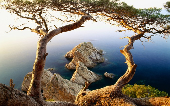 nature___sea_tree_on_the_cliff_by_the_sea_060927_